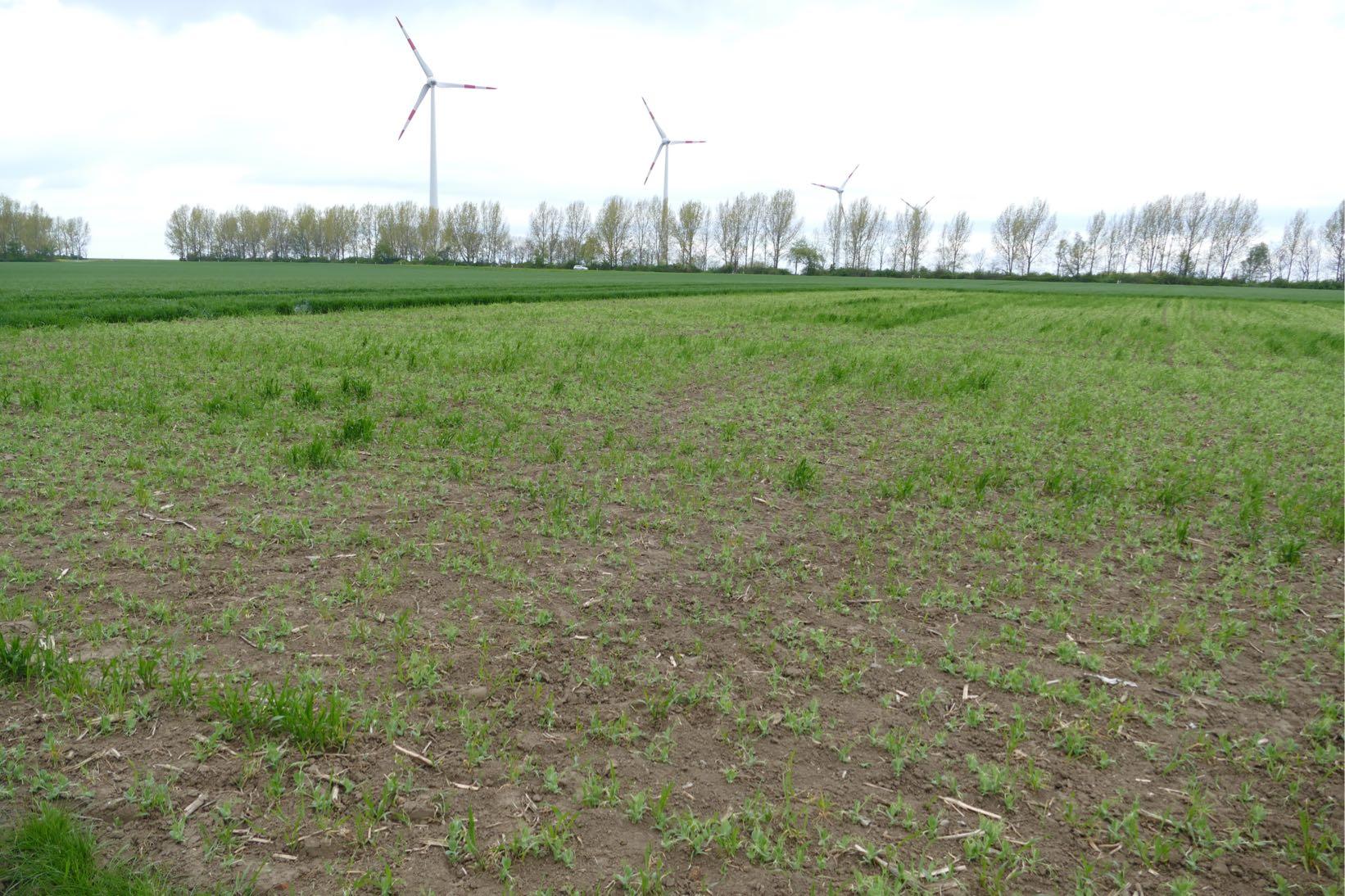 Agrargenossenschaft XY